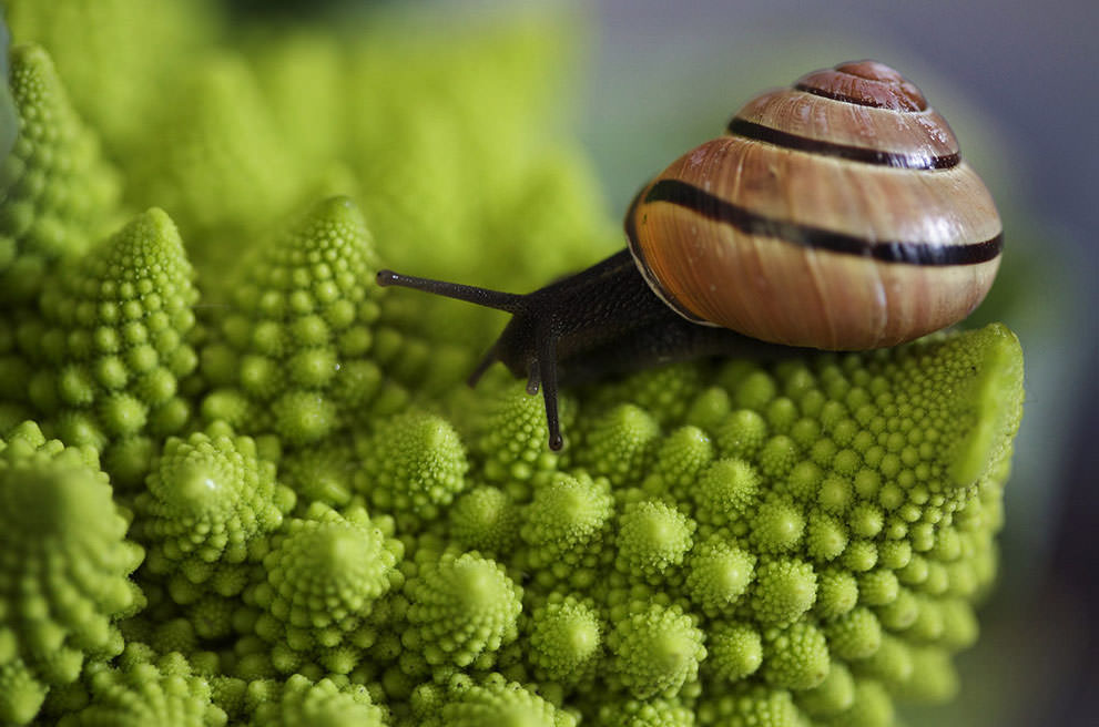 National Geographic Photo Contest 2013