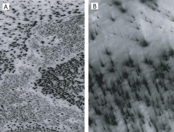 سطح مریخ و عنکبوت