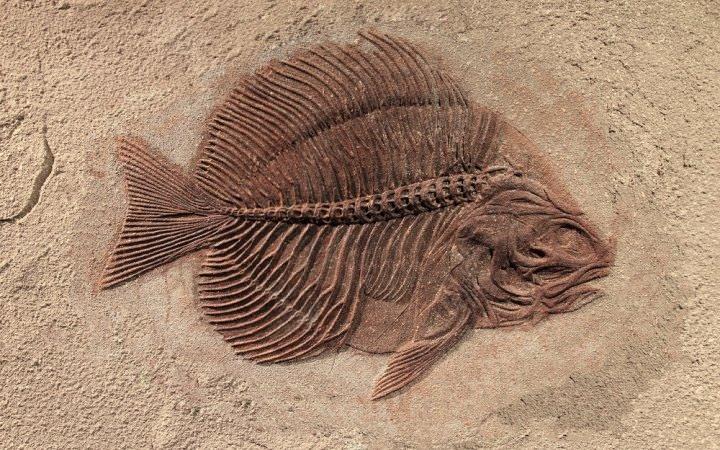 فسیل / fossil