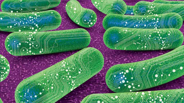 synthetic bacteria