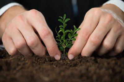 تلاش استارتاپ های سبز برای بهبود کیفیت محیط زیست