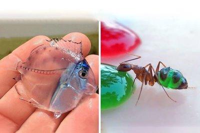 معرفی ۱۰ مورد از عجیبترین جانورانی که بدن شیشهای دارند