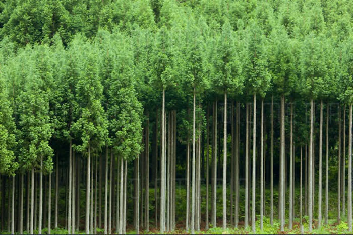 جنگل کاری/Afforestation