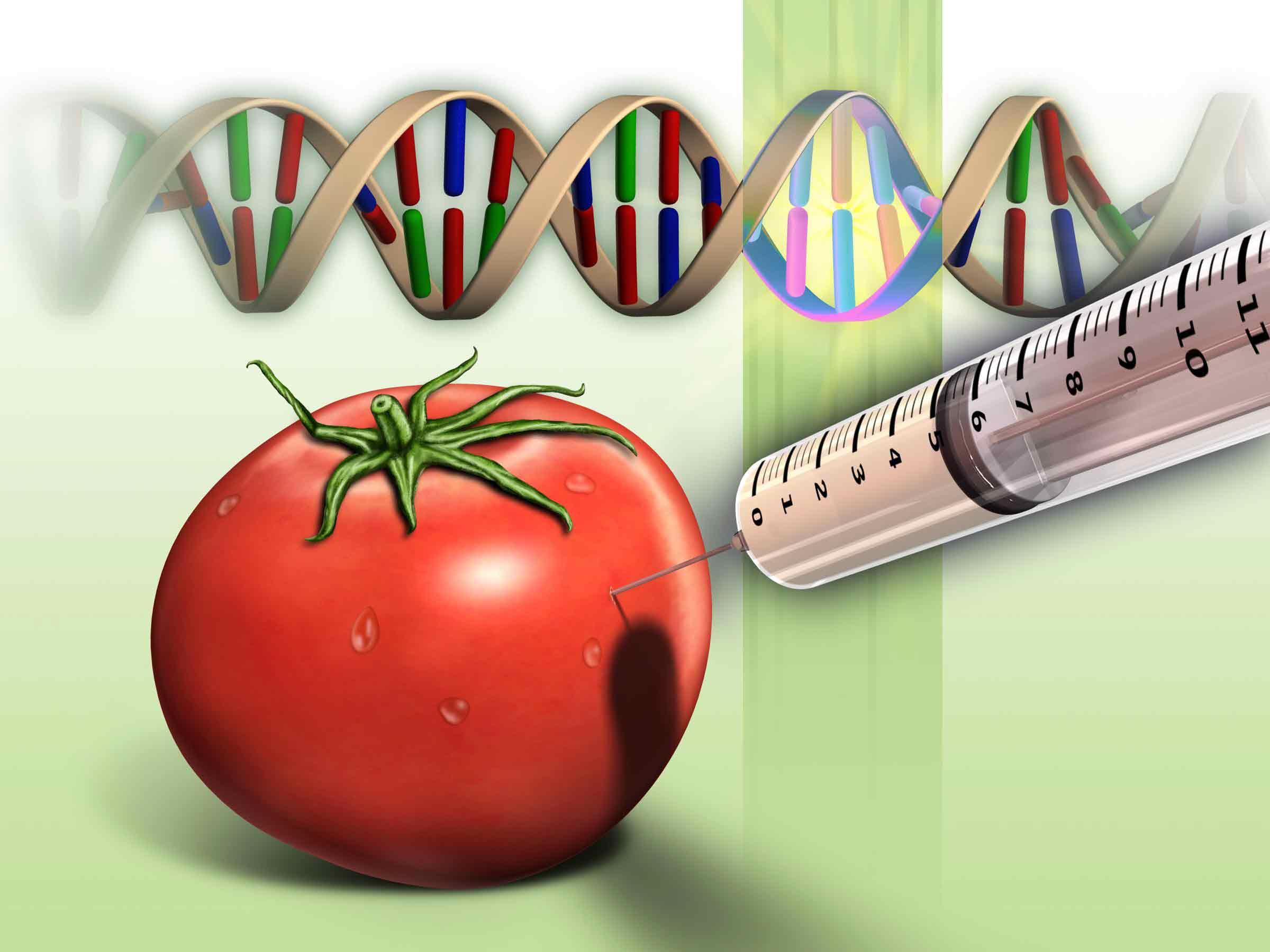 مواد غذایی اصلاح شدهی ژنتیکی / GM food