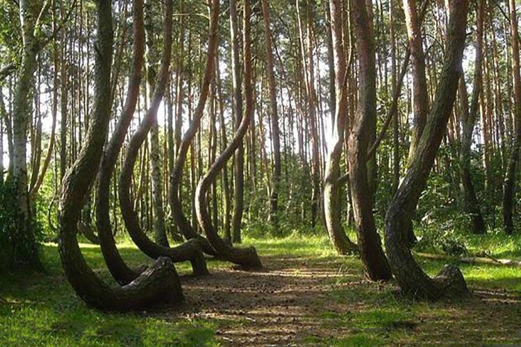 با بزرگترین باغ ۱۰۰۰ ساله جهان آشنا شوید