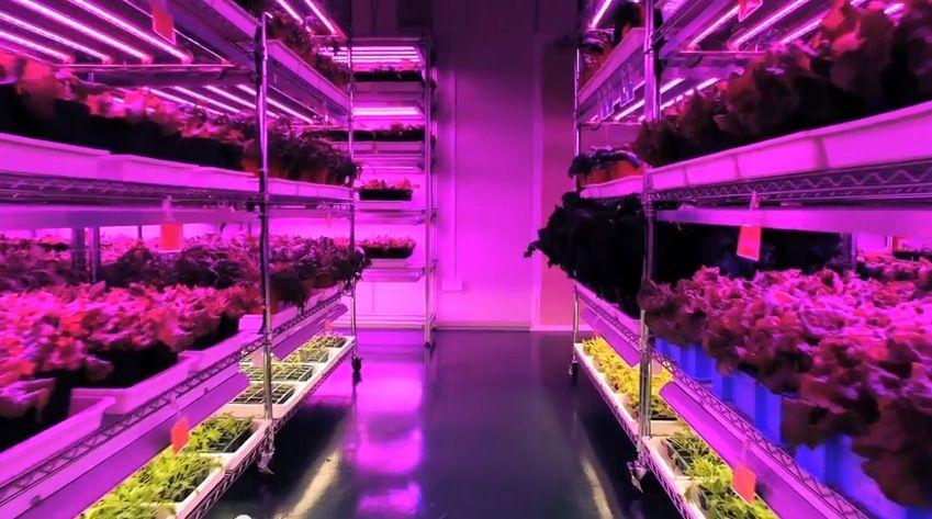 کشاورزی با نور الایدی/ Indoor farming