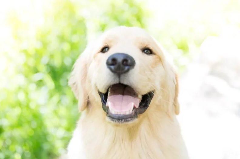 عکاسی حرفهای از حیوانات خانگی