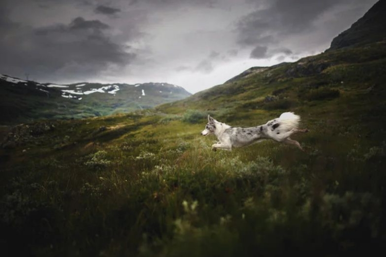 تصاویری دیدنی از سگها در مناظری نفسگیر