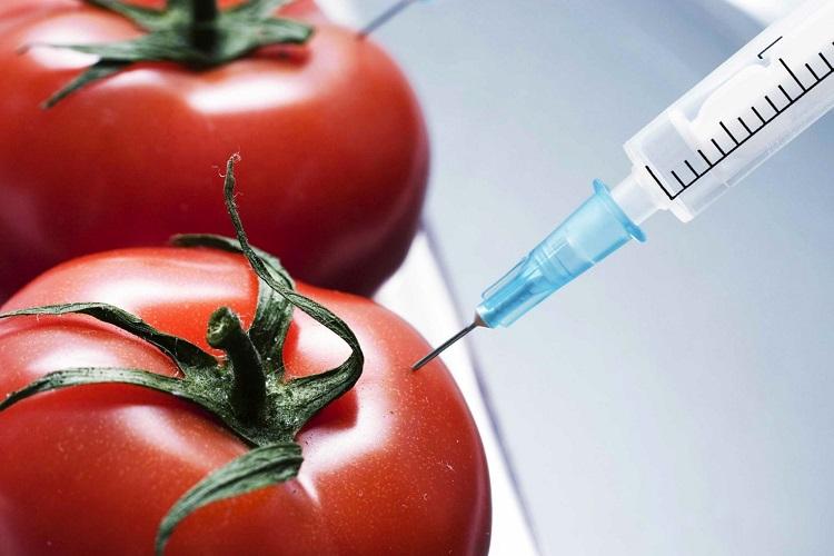 اصلاح ژنتیکی و محصولات تراریخته: گردش در یک گلخانه مدرن