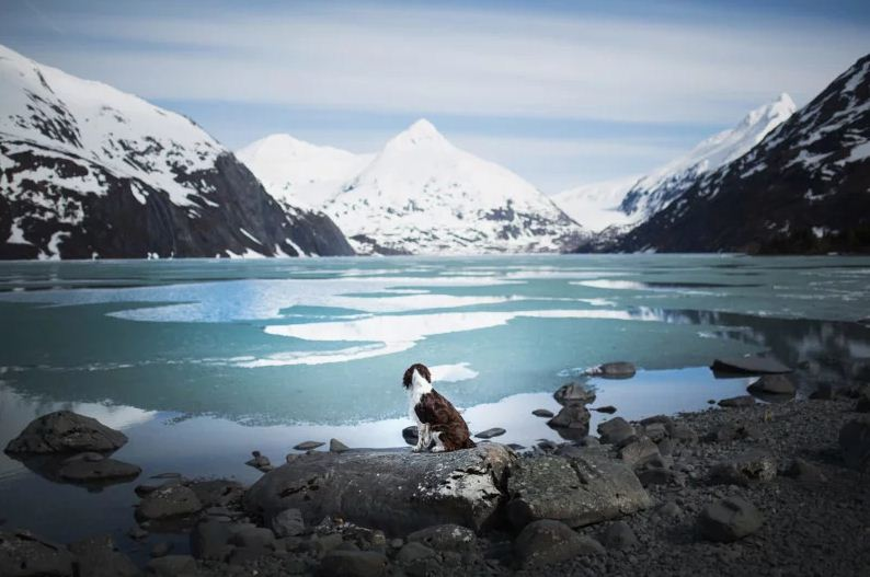 تصاویری از سگ ها در مناظری زیبا