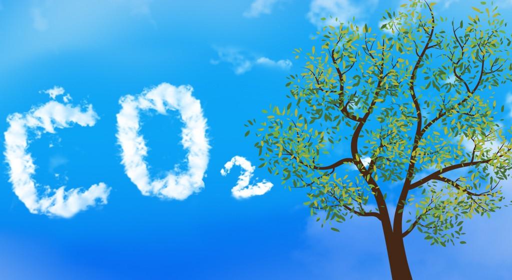 کربن دی اکسید گیاه