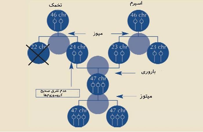 عدم تفرق صحیح کروموزوم ها