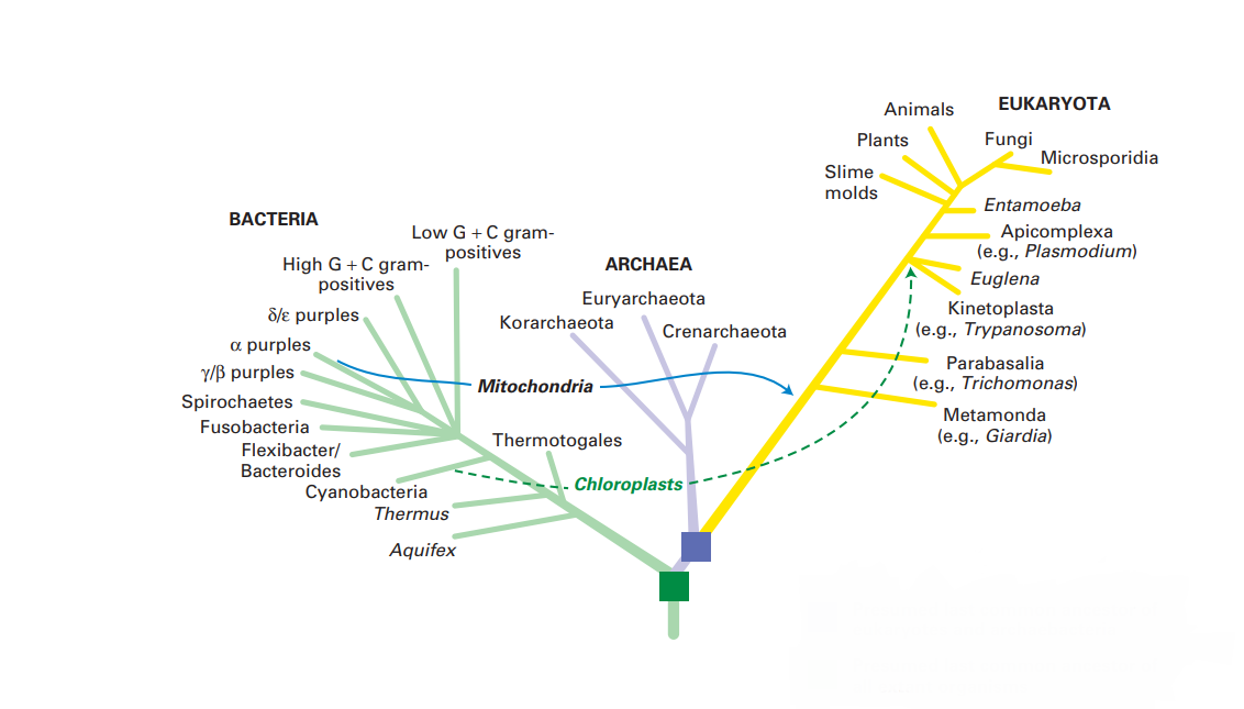 درخت تبارزایی / Phylogenetic tree