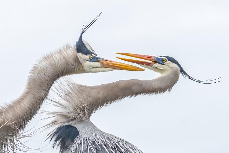 تصاویر برگزیده انجمن ملی زیست محیطی اودیبون سال ۲۰۱۹