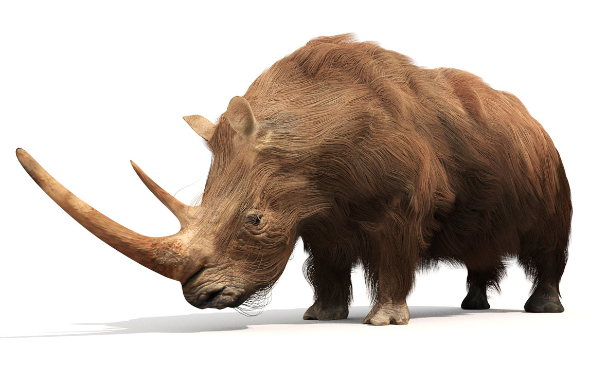 کرگدن پشمالوی / Woolly rhinoceros