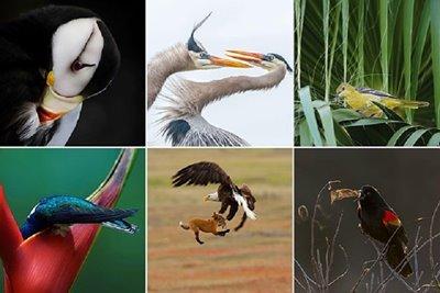 تصاویر برگزیده سال ۲۰۱۹ انجمن ملی زیستمحیطی اودیبون