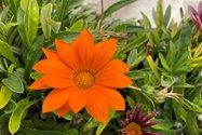 نمونه عکس دوربین واید آیفون ۱۲ پرو اپل در طول روز - بوکه طبیعی گلی در پارک آب و آتش تهران
