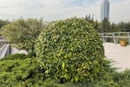 نمونه عکس پرتره آیفون ۱۲ پرو اپل - گیاهی در پل طبیعت تهران