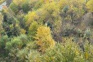 نمونه عکس دوربین تله فوتو آیفون ۱۲ پرو اپل در طول روز - شاخ و برگ درختان اطراف پل طبیعت تهران