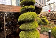 نمونه عکس دوربین اولتراواید آیفون ۱۲ پرو اپل در طول روز - گیاهی در پارک آب و آتش تهران