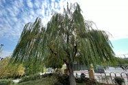 نمونه عکس دوربین اولتراواید آیفون ۱۲ پرو اپل در طول روز - درختی در پارک آب و آتش تهران