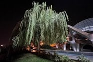 نمونه عکس دوربین اولتراواید آیفون ۱۲ پرو اپل در تاریکی - درختی در کنار گنبد مینا پارک آب و آتش تهران
