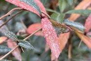 نمونه عکس دوربین اصلی آیفون ۱۲ پرو مکس در طول روز - گیاهی در پارک صبا