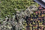 نمونه عکس دوربین اصلی آیفون ۱۲ پرو مکس در طول روز - گیاه تزئینی در باغ کتاب تهران