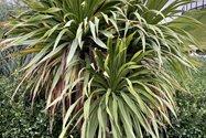نمونه عکس دوربین اصلی آیفون ۱۲ پرو مکس در طول روز - گیاهی در باغ کتاب تهران