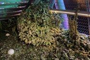 نمونهعکس دوربین اصلی آیفون ۱۲ پرو مکس در تاریکی - گیاهی روی پل طبیعت تهران