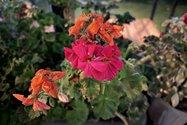 نمونهعکس دوربین اصلی آیفون ۱۲ پرو مکس در تاریکی - گلی در خیابان جردن