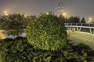 نمونهعکس پرتره آیفون ۱۲ پرو مکس - گیاهی در پل طبیعت تهران