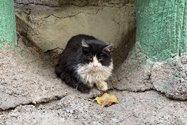 نمونه عکس دوربین تلهفوتو آیفون ۱۲ پرو مکس در طول روز - گربه در پارک طالقانی تهران