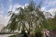 نمونهعکس دوربین اولتراواید آیفون ۱۲ پرو مکس - درختی در باغ کتاب تهران