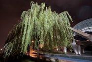 نمونهعکس دوربین اولتراواید آیفون ۱۲ پرو مکس در تاریکی - درختی در پارک آب و آتش تهران کنار گنبد مینا