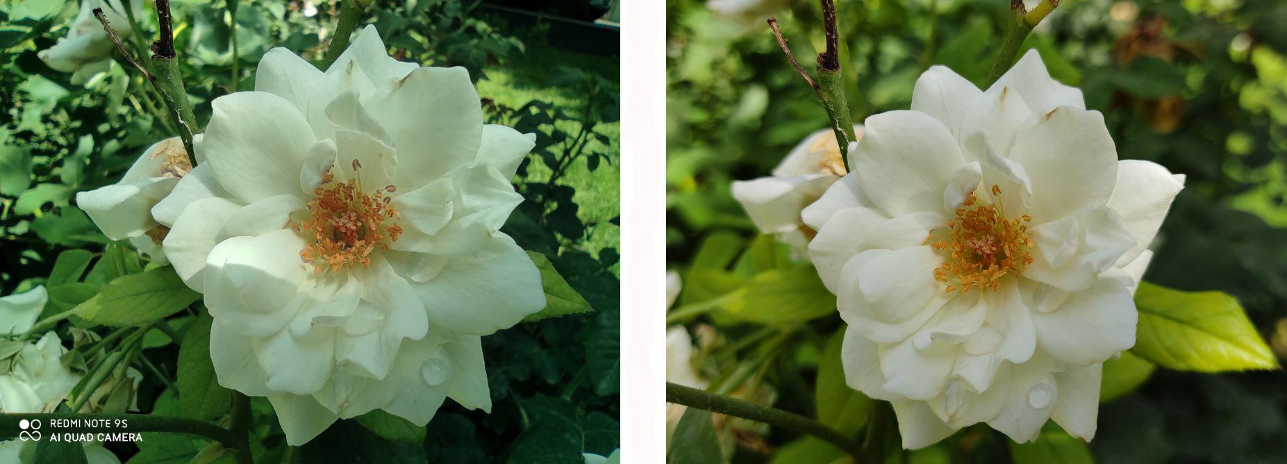 عکس گل ماکرو در برابر عکس گل واید
