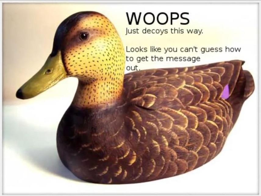 سیکادا ۳۳۰۱: اردک