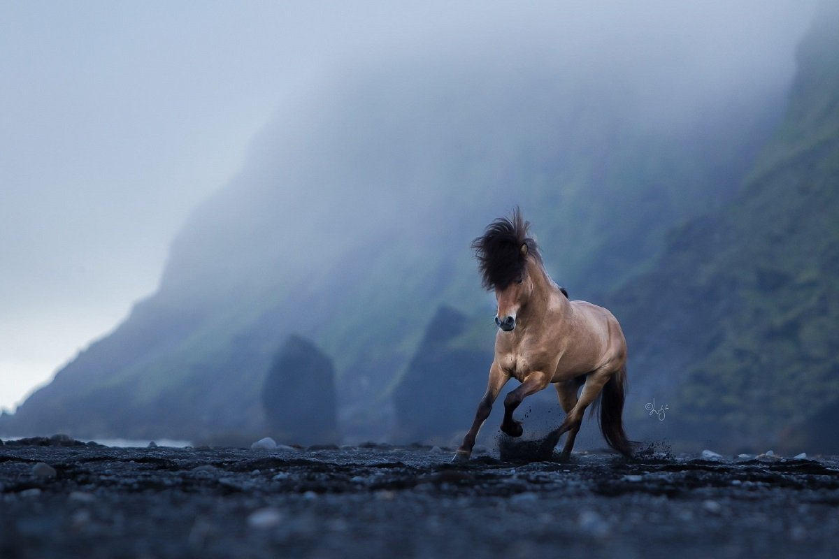 وقار وحشی؛ ۳۰ تصویر باشکوه از اسبهای ایسلندی