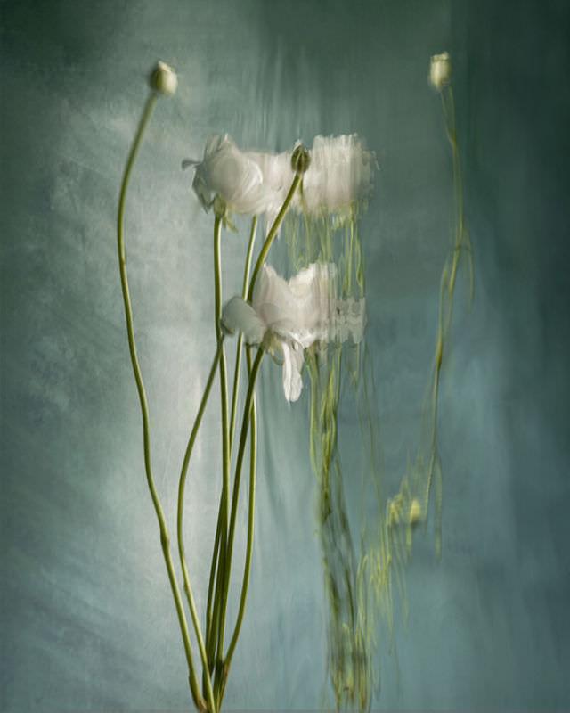گلها زیر آب