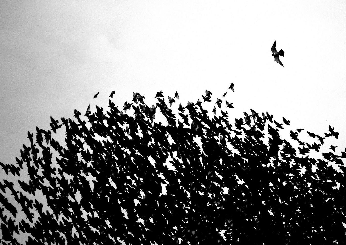 توماس ایستربروک /برندگان مسابقه عکاس Nature TTL