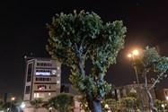 آیفون اس ای 2020 / iPhone SE 2020 نمونه تصویر عکاسی در شب 07