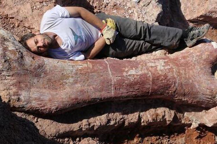 دیرین شناسان بقایای مربوط به بزرگ ترین موجود کره ی زمین را که درخشکی زندگی می کرده، کشف کردند
