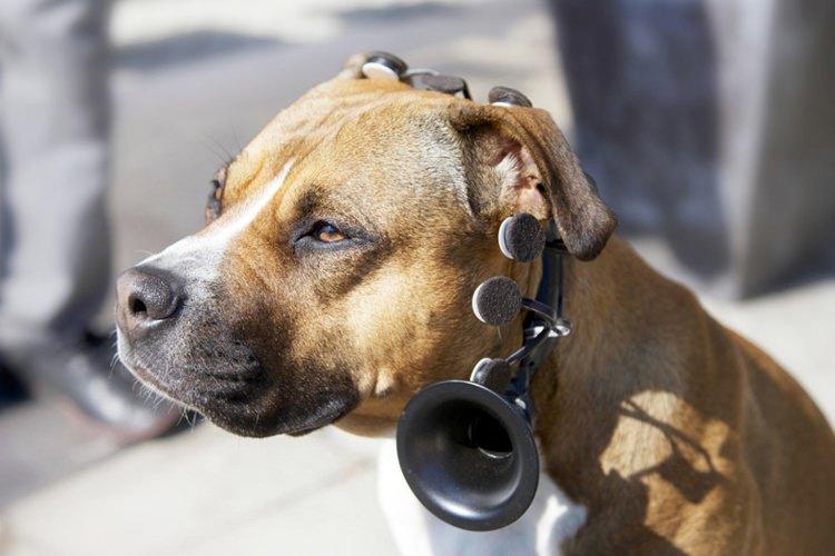 سرمایه گذاری مترجم سگ