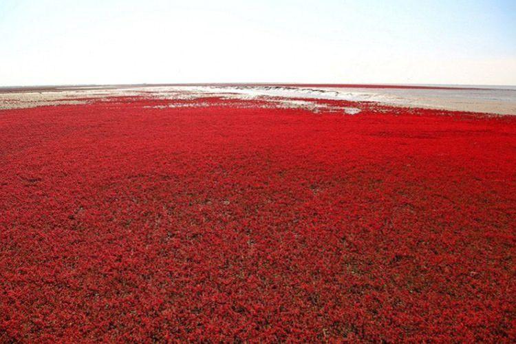 کرانه های سرخ رنگ شگفت انگیز در کشور چین