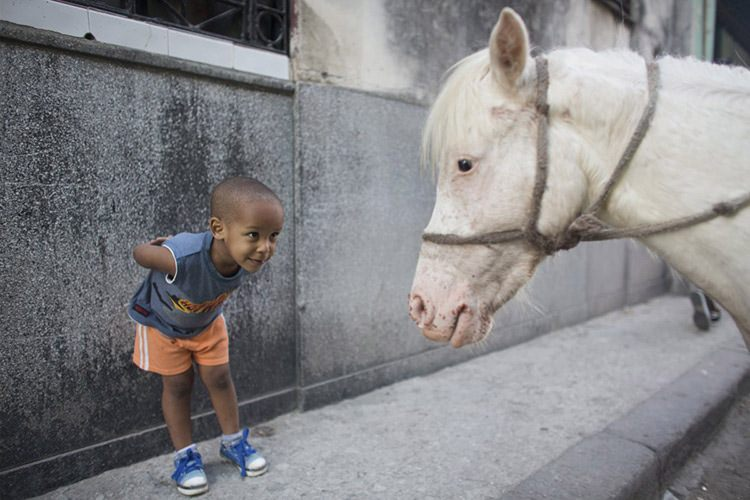 20 alexo carmona 2 looks at coco a two year old pony in downtown havana s b9452