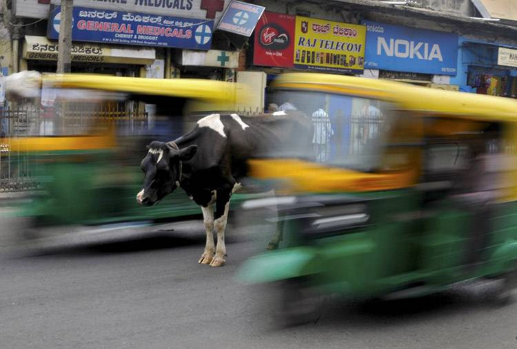 5 a cow stands in the middle of a busy road as auto rickshaws pass by in bengaluru india s c407a
