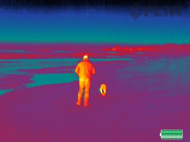 beach dog walk.0 290c9