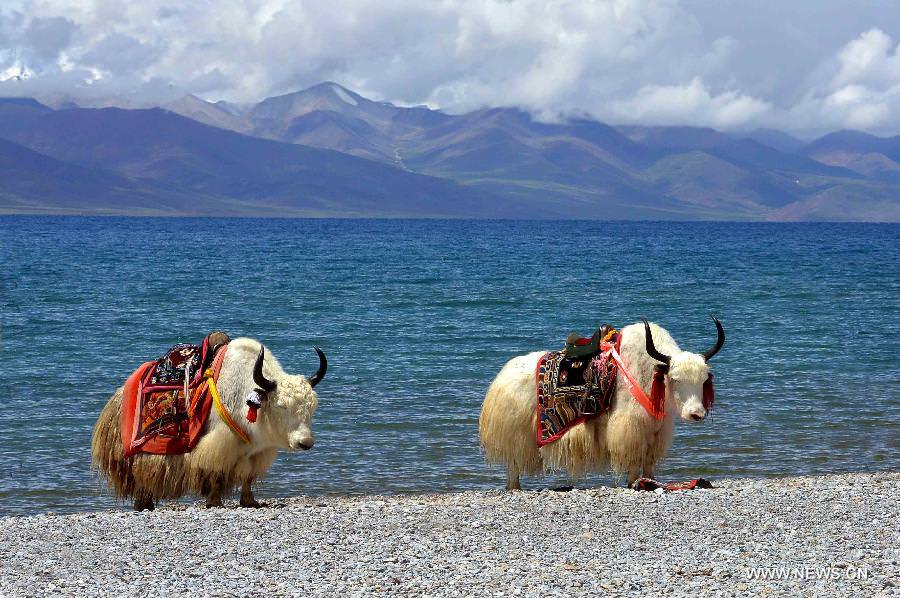 tibet-most-relaxing-places-in-the-world