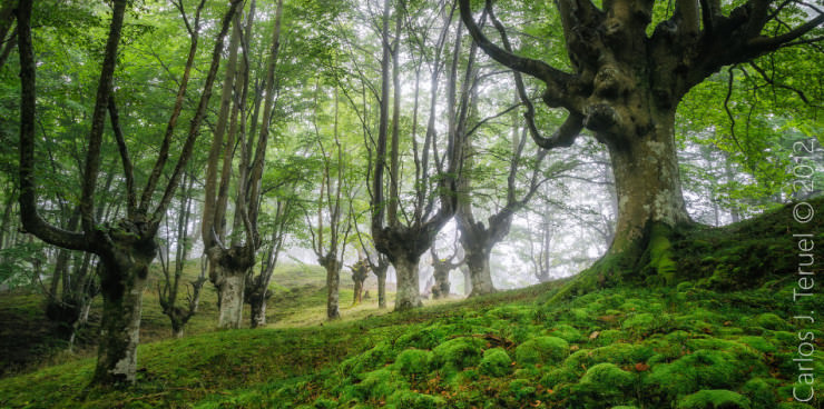 Gorbea-Photo-by-Carlos-Javier-Teruel-Galvez-740x368