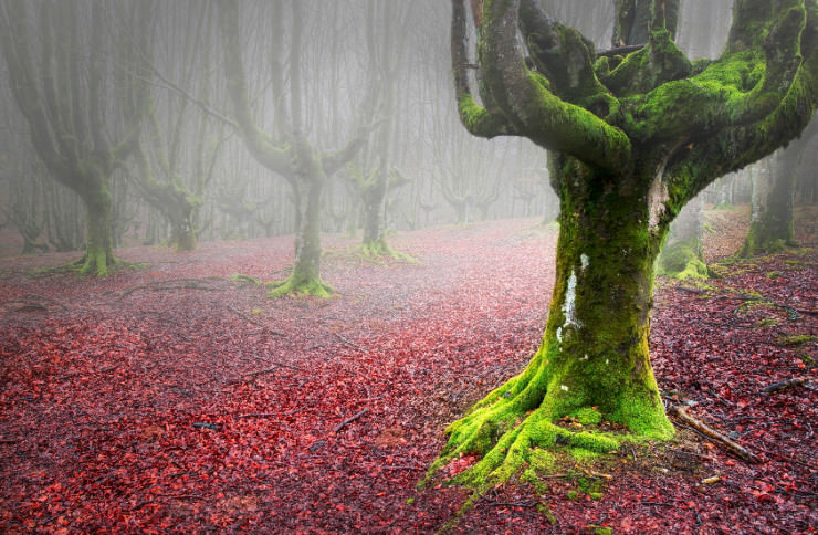 Gorbea-Photo-by-David-Pintado-740x484